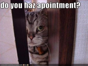 funny-pictures-cat-asks-if-you-have-an-appointment