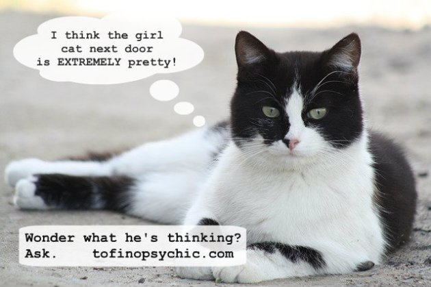 tuxie kate sitka pet psychic