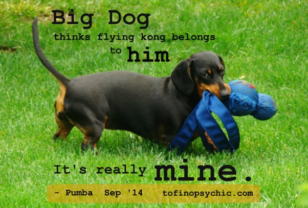Pumba doxie pet psychic kate sitka